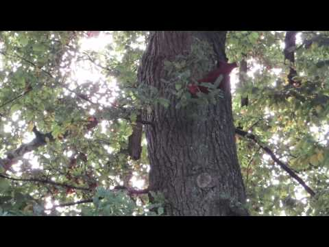 Frühsport im Baum