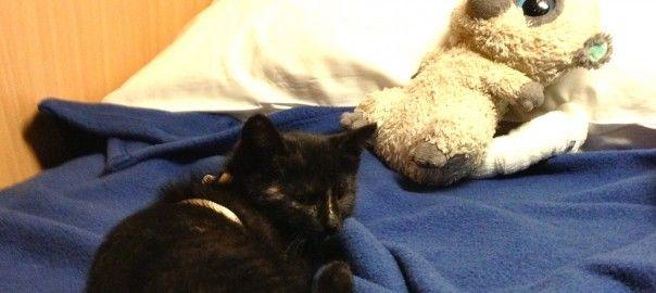 Wie alles begann – Das Katzenbaby im Autozug