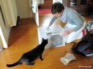 Zu seiner und unserer Sicherheit bekommt Henry die Impfung in einem Spezial-Käfig