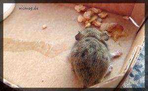 Adieu kleine Maus