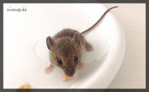 Eine Stärkung für die Maus