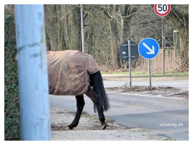 Pferd Ahrensfelde