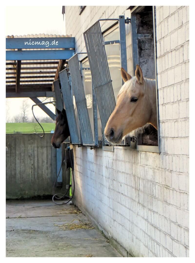 Pferdegasse