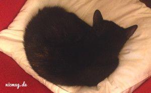 sehr, sehr müde Katze …
