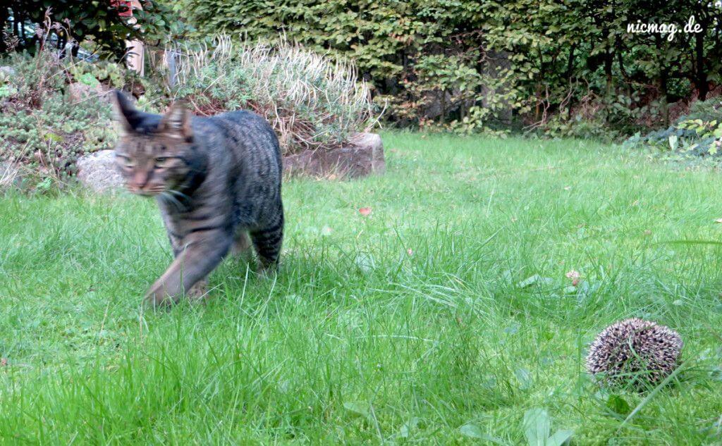 Sir Henry dreht seine Igel-Runde