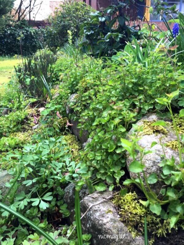 Garten naturnah