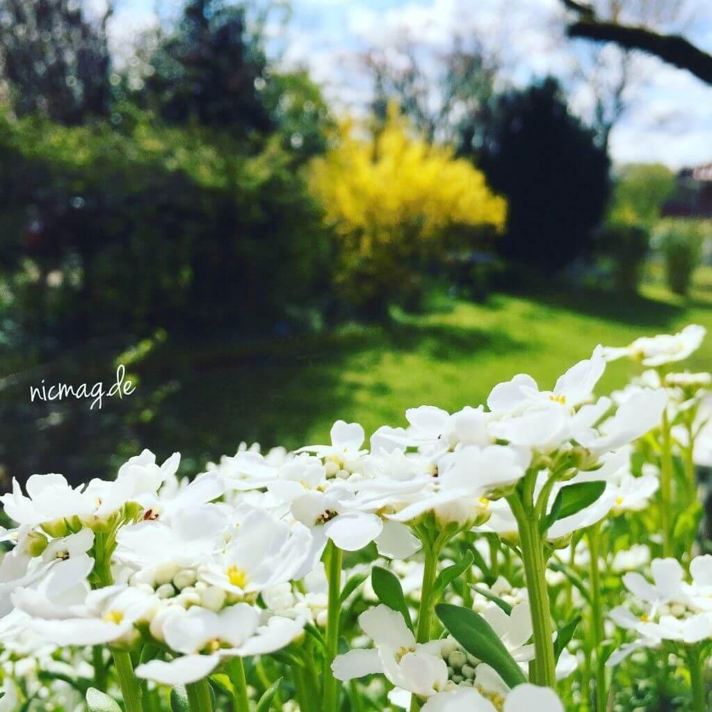 Blumen Garten