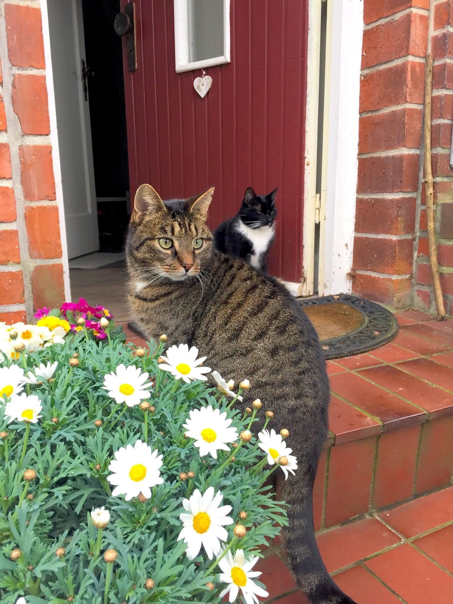 Katzen Fred Henry
