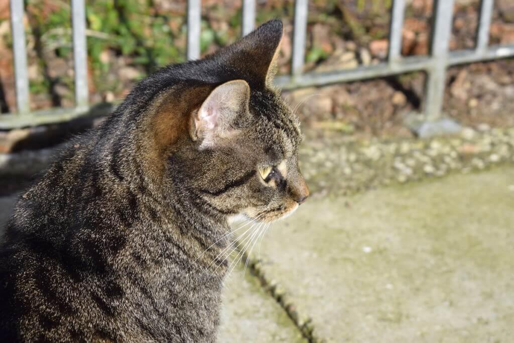 Katze Frühling Sonnenschein
