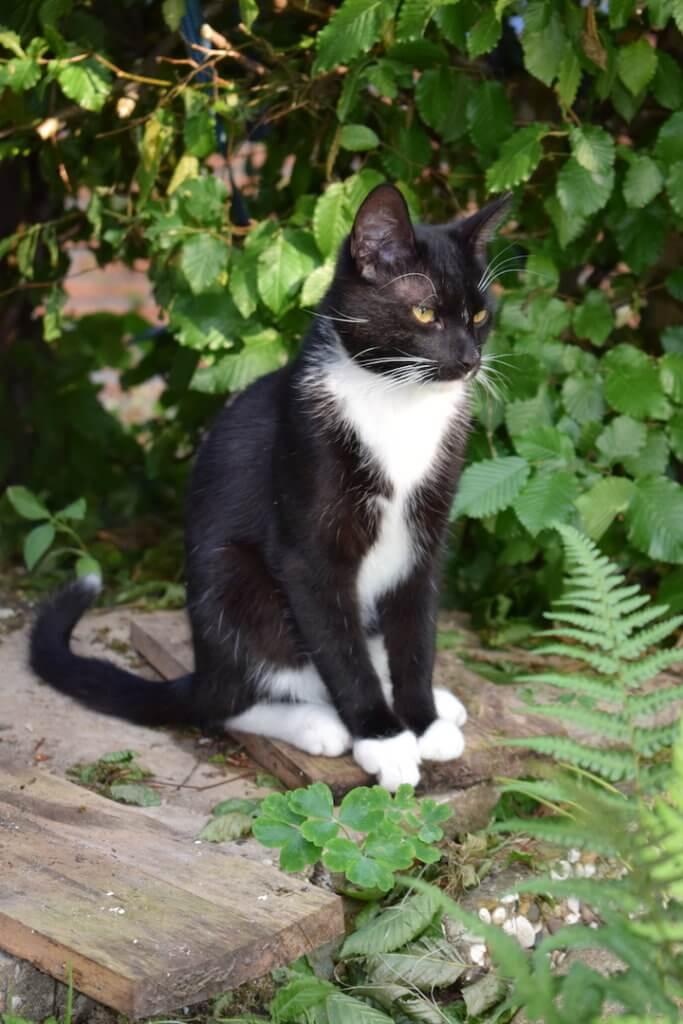 Fred Katze vermisst