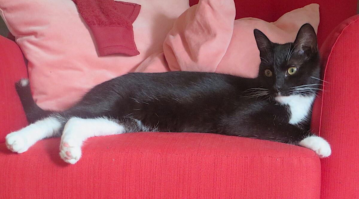 Fred vermisste Katze