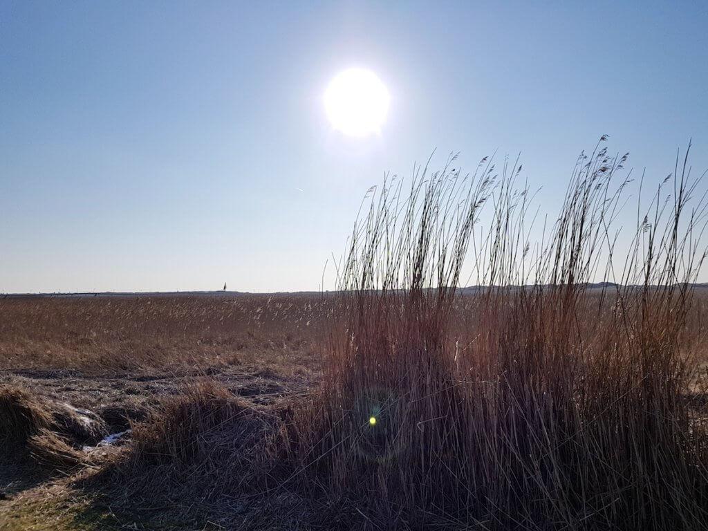 Die Dünen in St. Peter-Ording – Foto: Nicole Stroschein