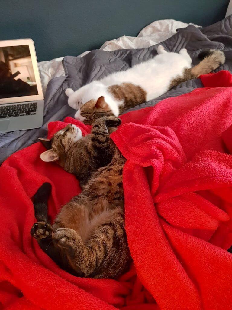 Kinder, Katzen, Lieblingsmenschen –Foto: Nicole Stroschein